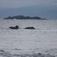 20050402-04-02p08whales.jpg