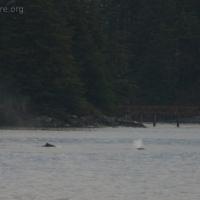 20051212-12-12p08whale.jpg