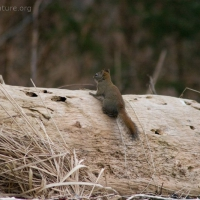 20060218-02-18p02squirrel.jpg