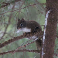 20060318-03-18p21squirrel.jpg