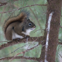 20060318-03-18p22squirrel.jpg