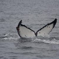 20060705-07-05p06whale.jpg