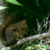20060819-08-19p12squirrel.jpg
