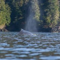 20061027-10-27p07whale.jpg