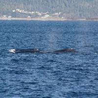 20061104-11-04p02whales.jpg