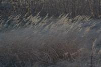 20061110-11-10p11grass.jpg