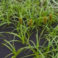 20060628-06-28p22beachplant.jpg