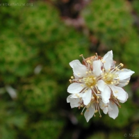 20000807-8-7partridgefootflower.jpg