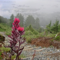 20030718-07-18paintbrush.jpg