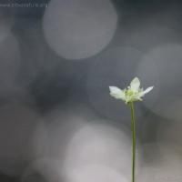 20040814-08-14p05flower.jpg