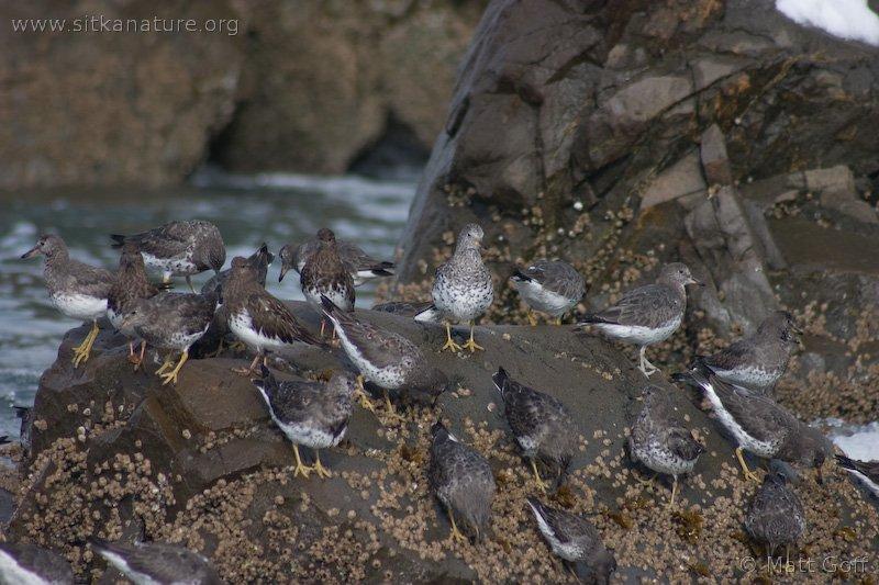 20040330-03-30shorebirds.jpg