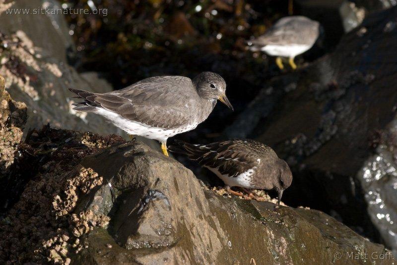 20051014-10-14p17birds.jpg