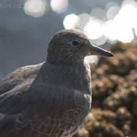20051014-10-14p14surfbird.jpg