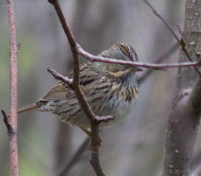 20060520-05-20p06sparrow.jpg