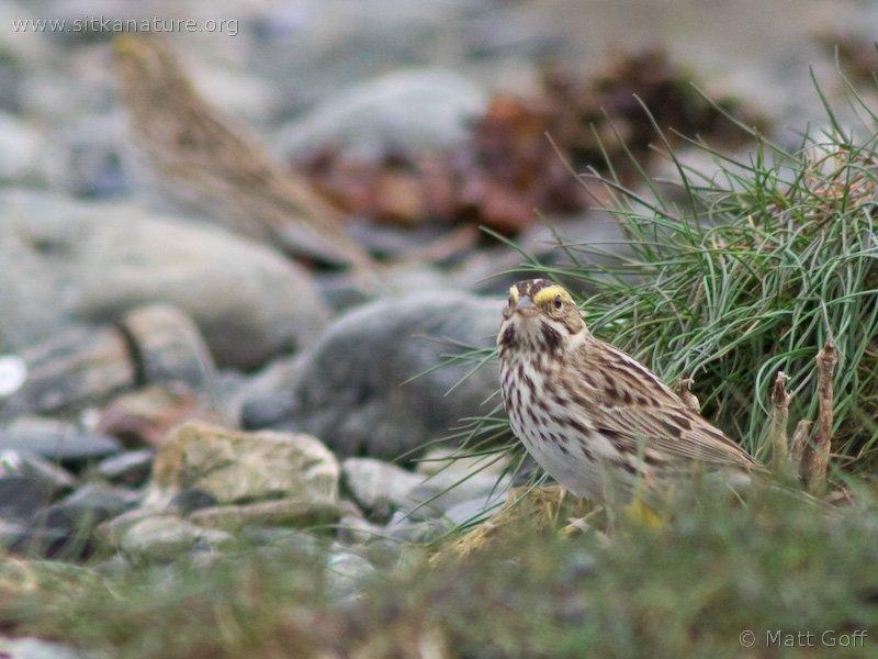 20060523-05-23p07sparrow.jpg