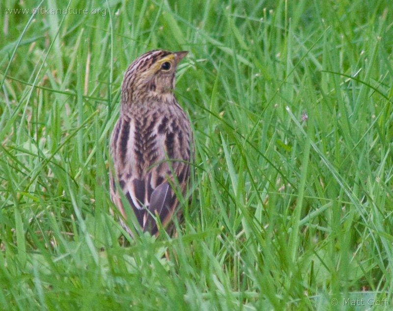 20060905-09-05p03sparrow.jpg
