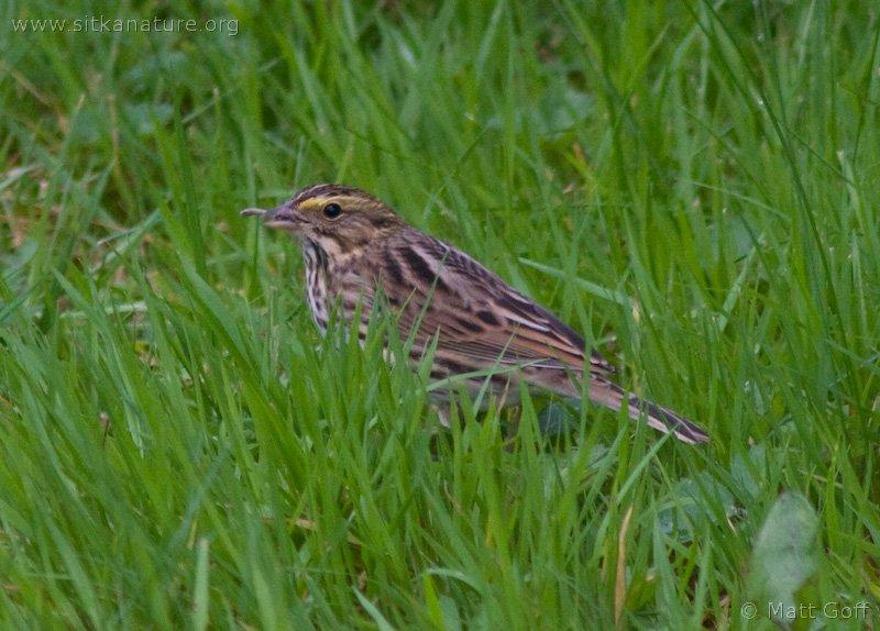 20060905-09-05p04sparrow.jpg