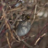 20060224-02-24p04sparrow.jpg