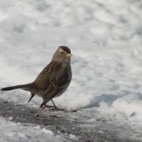 20060224-02-24p06sparrow.jpg