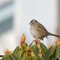 20060225-02-25p05sparrow.jpg