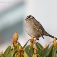 20060225-02-25p06sparrow.jpg