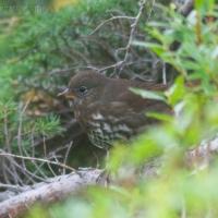 20060904-09-04p08sparrow.jpg