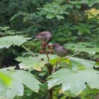 20060908-09-08p01sparrows.jpg