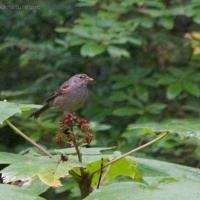 20060908-09-08p02sparrow.jpg