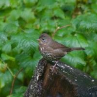 20060930-09-30p04sparrow.jpg
