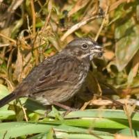 20061102-11-02p01sparrow.jpg