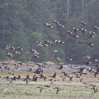 20060429-04-29p15waterfowl.jpg